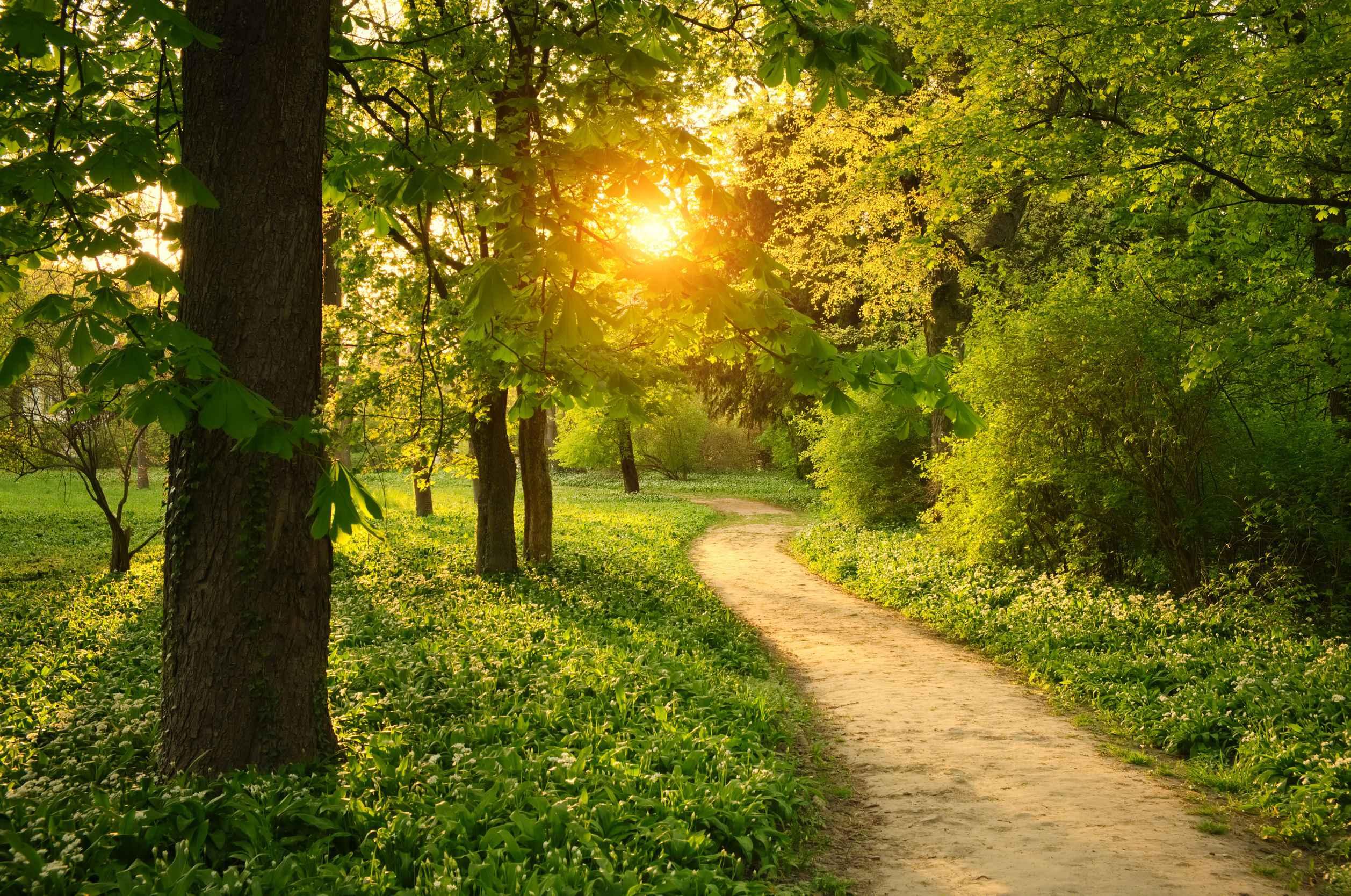 Path on the park